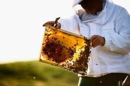Guerlain открыли школу пчеловодства
