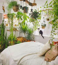 Оказалось, что растения не сильно влияют на воздух в квартире